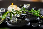 picture of tendril  - beautiful spa background of green twig passionflower with tendril ice and candles on zen basalt stones with drops closeup