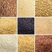 foto of quinoa  - Collage of 9 cereals - JPG