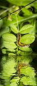 picture of green caterpillar  - hairy yellow and black caterpillar among green leaves - JPG