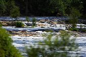 stock photo of suwannee river  - Big Shoals on the Suwannee River - JPG