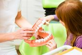 picture of toothbrush  - Female dentist explaining girl cleaning tooth with toothbrush on model  - JPG