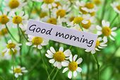 image of morning  - Good morning card with chamomile flowers - JPG