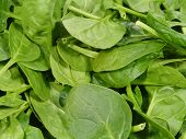 pic of leafy  - Fresh spinach it is a leaf vegetable or leafy green - JPG
