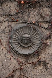 foto of century plant  - Old mascaron overgrown with climbing plants at the 19th century building in Berlin - JPG