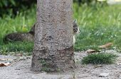 pic of scared baby  - Cat is hiding and peeking behind the tree - JPG