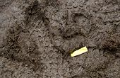 pic of mud  - Golden Confetti in Mud with footprints around it - JPG