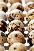 picture of quail egg  - Quail eggs in rows in package - JPG