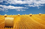 image of hay bale  - Agricultural landscape of hay bales in a golden field - JPG
