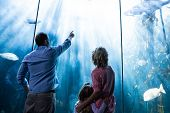pic of fish  - Father pointing a fish while the mother and the daughter looking at fish tank at the aquarium - JPG