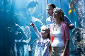 stock photo of fish  - Daughter pointing a fish while her mother and father looking at fish tank - JPG