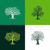 Olive_tree_set poster