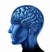 stock photo of frontal lobe  - brain lobe sections divisions of mental neurological lobes activity isolated - JPG