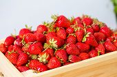 Ripe Strawberries Ready For Eating In Wooden Boxes. Red Ripe Strawberries Closeup. Selective Focus. poster