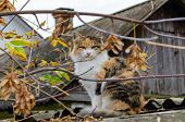 A Fluffy Multi-colored Cat Sits On The Roof Against The Background Of A Village House With A Brick C poster