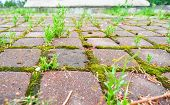 Perspective With Shallow Depth Of Field Of Old Cobblestone Pavement In City Park. Wild Grass And Mos poster