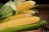 Yellow Sweet Raw Corn In A Wooden Box On Textile Background Close Up poster