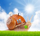 foto of campervan  - The snail with his mobil home on the road - JPG