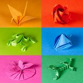 Colored Origami Paper Figures On Color Backgrounds. Crane, Rose, Frog, Sea Shell, Butterfly On Flowe poster