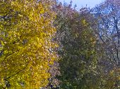 Foliage Against Blue Sky. Autumn Time, Autumn In The City, Urban Autumn Landscape With A Pond, Peopl poster