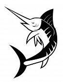 stock photo of spearfishing  - isolated White fish marlin  - JPG