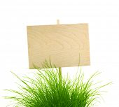 Empty Wooden Sign with Fresh Green Grass / isolated on white with copy space for your text
