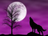 stock photo of wolf moon  - Howling wolf in a dark and cloudy night with moon - JPG