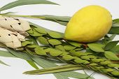 stock photo of sukkoth  - Etrog (citron fruit) hadass (myrtle branches) Lulav (Date palm tree branch) and Arava (Willow) Used in a ceremony of the Jewish holiday of Sukkoth.