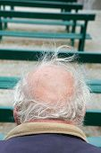 picture of pelade  - Back of head of senior with grey hair - JPG