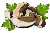 stock photo of porcini  - Dried slices of porcini mushrooms on a white background - JPG