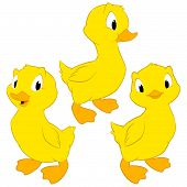 picture of baby duck  - Cartoon baby ducks - JPG