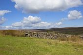 foto of windswept  - a country dry stone wall on a windswept moorland under a blue cloudy sky in autumn - JPG