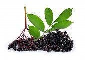 image of elderberry  - Elderberry  - JPG