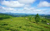 image of mountain chain  - Impressive landscape at Dalat Vietnam in sunny day amazing cloudy sky chain of mountain far away people on farm beautiful tea plantation wonderful country view for Da Lat travel - JPG