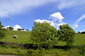 image of hayfield  - A view of Little Hayfield in Derbyshire England UK - JPG