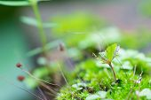 picture of marshlands  - Green little tree or moss in marshland - JPG