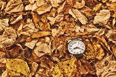 pic of pass-time  - Vintage alarm clock in dry autumn leaves Passing of time and season change concept - JPG