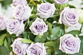 image of bunch roses  - Bunch of violet and purple beautiful roses - JPG