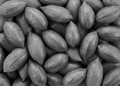 stock photo of pecan nut  - Pecan nuts as an abstract background texture  - JPG