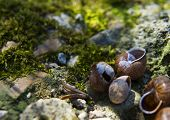 foto of snail-shell  - Background with spring snail shells on moss - JPG