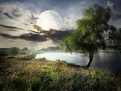 stock photo of willow  - Willow near river and bird under full moon - JPG