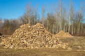 stock photo of discard  - Piles of wooden fresh mulch outdoors on field discard of timber industry - JPG