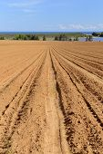 foto of plowed field  - Field plowed for planting potato crop in the late spring with view of ocean on Prince Edward Island, Canada.