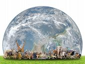 picture of eland  - animal of the world with planet earth on white backgroundElement of this image are furnished by NASA - JPG