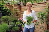 pic of fifties  - Smiling fifty year old lady gardener outside in the garden holding a pack of lobelia - JPG
