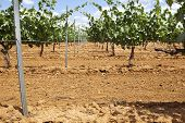 stock photo of tierra  - Vineyard metal poles and wire at Tierra de Barros Region with its unique red soil Extremadura Spain - JPG