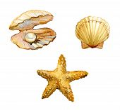 Set Of Sea Shells, Starfish, Shell With A Pearl Isolated On White Background, Watercolor Illustratio poster