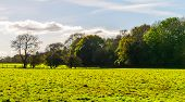 English Green Meadow On A Sunny Day, A Typical Rural Landscape Of The British Countryside poster