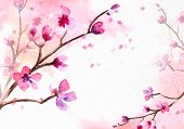 Cherry Blossom On Pink Watercolor Background. Spring Background. poster