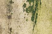 Textured Background From A Tiled Wall With Traces Of Moisture In The Form Of Green Fungal And Green  poster