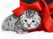 Sad Kitten Cute Kitten With A Red Bow. A Kitten With A Red Ribbon. Kitten As A Gift poster